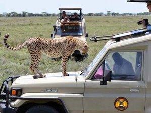 6 Days Southern Classic Safari Tour in Mikumi and Ruaha National Park, Tanzania