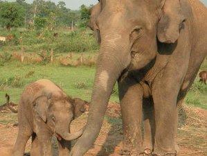 3 Day Safari in Chitwan National Park, Subarnapur