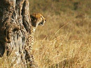 3 Days Maasai Mara  Budget Joining Safari in Kenya