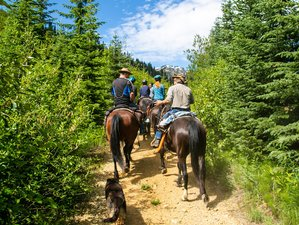 3 Day Gold Mine Mountain Horseback Riding Expedition in Pemberton, British Columbia