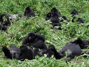 4 Days Amazing Wildlife Safari in Western Region, Uganda