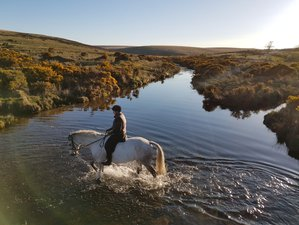 3 Days Private Luxury Holiday with a Personal Guide and Your Own Itinerary in the Heart of Dartmoor