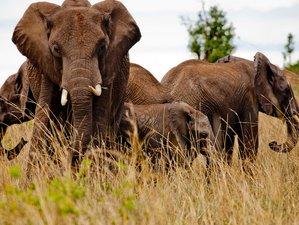 7 Days Luxury Lodge Stay & Wildlife Safari in Tarangire, Serengeti, and Ngorongoro Crater, Tanzania