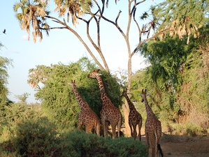 3 Days Wings over Samburu Safari in Kenya