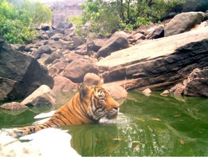 4 Day Wildlife Safari in Kailadevi Wildlife Sanctuary