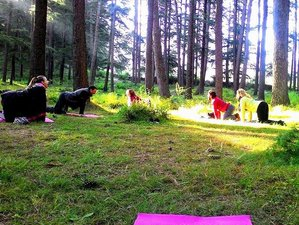 15 Days Meditation & Holistic Yoga Retreat Himalayas, India