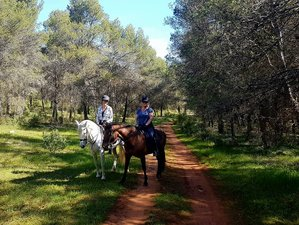 6 Days Extraordinary Horse Riding Holiday in Andalucia, Spain