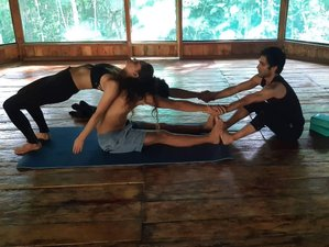 7 Day Ayahuasca, Meditation, and Yoga Retreat in the Amazon Rainforest, Iquitos, Loreto