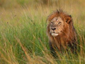 2 Days Safari Holiday in Ngutuni Sactuary, Kenya