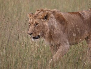 8 Days Best of Migration Watch Safari in Tanzania