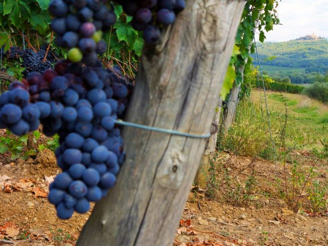 10 Days Culinary and Wine Tours in Italy