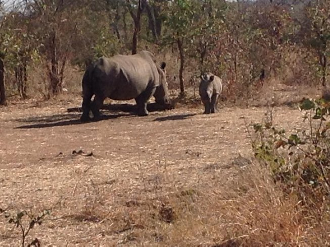 7 Days Amazing Safari in South Luangwa, Zambia