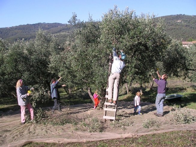 8 Days Olive Harvest Working Holiday in Italy