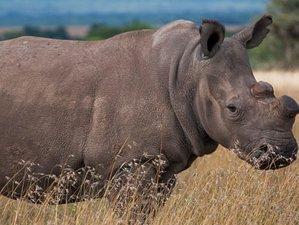 5 Days Safari in Central Highlands, Kenya