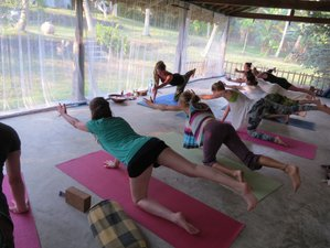14 Days Meditation, Yoga and Ayurveda Treatment in Sri Lanka