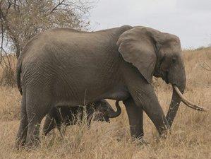 7 Days Northern Circuit Big Five Classic Safari in Tanzania