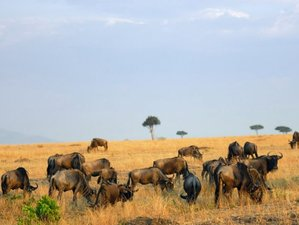 6 Days Serengeti and Ngorongoro Safari in Tanzania