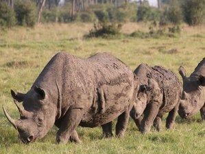 5 Days Wildlife Safari in Masai Mara, Lake Nakuru, and Lake Naivasha, Kenya