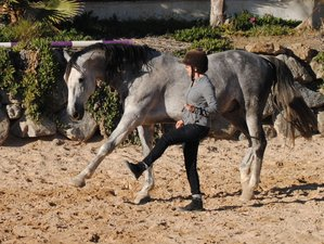 5 Day Speaking Horse Language Riding Holiday in the Province of Malaga, Costa del Sol