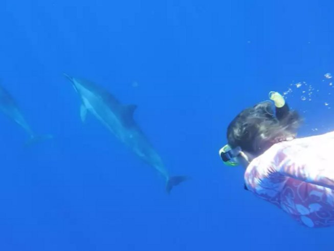10 Days Swimming with Dolphins and Spiritual Meditation Retreat in Hawaii, USA