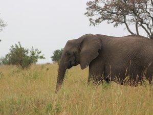 4 Days Mid-Range Safari in Serengeti, Lake Manyara, and Ngorongoro Crater in Tanzania
