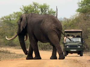 7 Days Affordable Tented of Off-Suite Hut Safari in Kruger National Park, South Africa