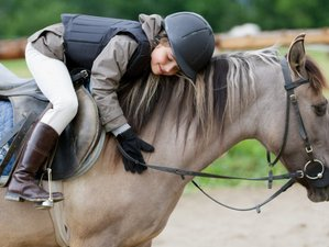 5 Day Beginners Horse Riding Holiday in Stangerode, Saxony-Anhalt