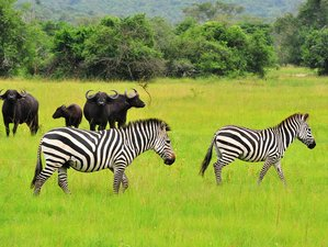 3 Days Awe-inspiring Lake Mburo National Park Safari in Uganda