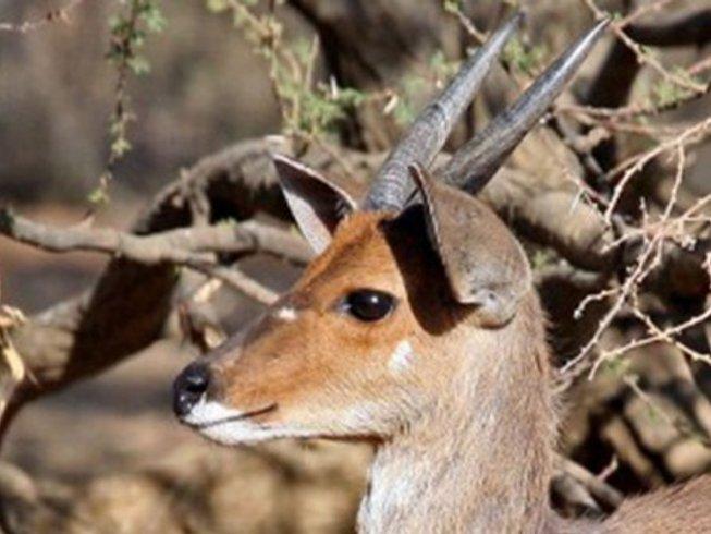 3 Days Pilanesberg Game Reserve Safari in South Africa