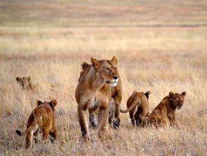 4 Days Budget Migration Safari in Serengeti and Ngorongoro, Tanzania