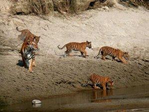 3 Day Affordable Safari in Bardia National Park, Bardiya